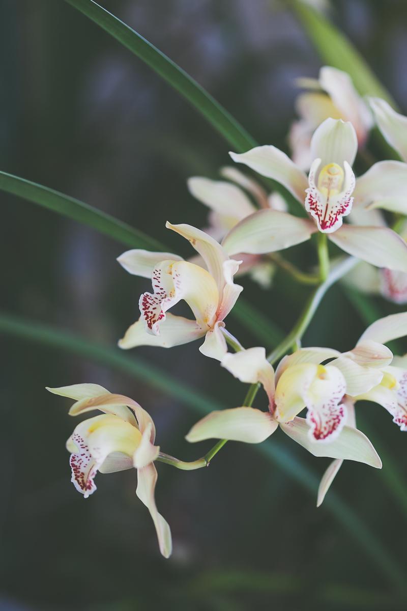 ecozest-knysna-florist-shoot-6