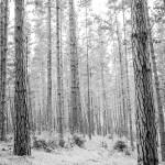 Stock Image bark, forest, background