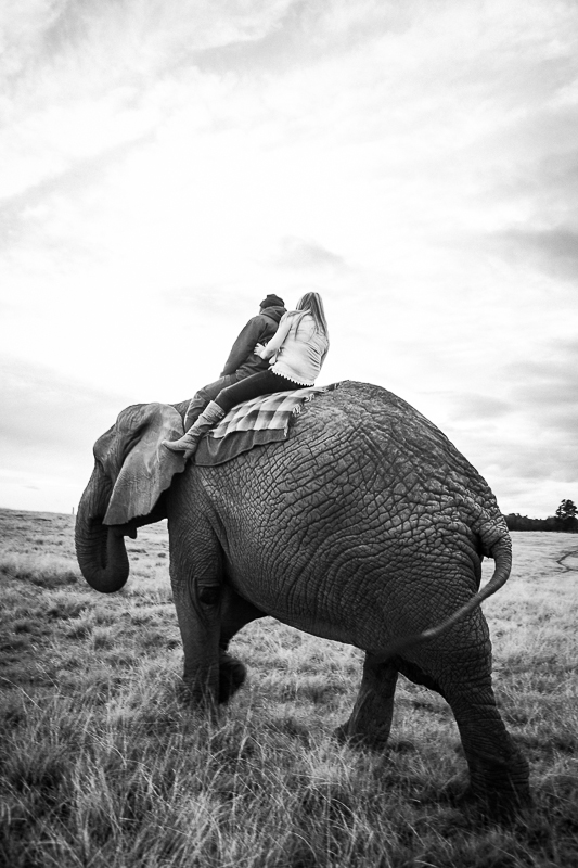 Elmar & Colleen Anniversary Shoot Knysna Elephant Park-1