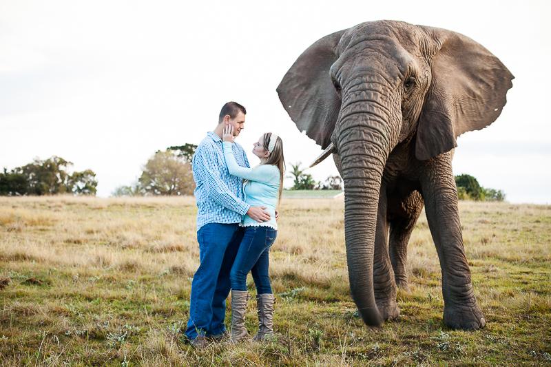 Elmar & Colleen Anniversary Shoot Knysna Elephant Park-37