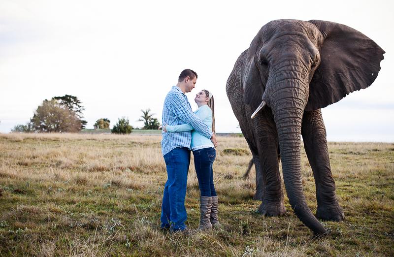 Elmar & Colleen Anniversary Shoot Knysna Elephant Park-41