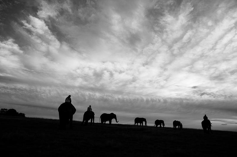 Elmar & Colleen Anniversary Shoot Knysna Elephant Park-7